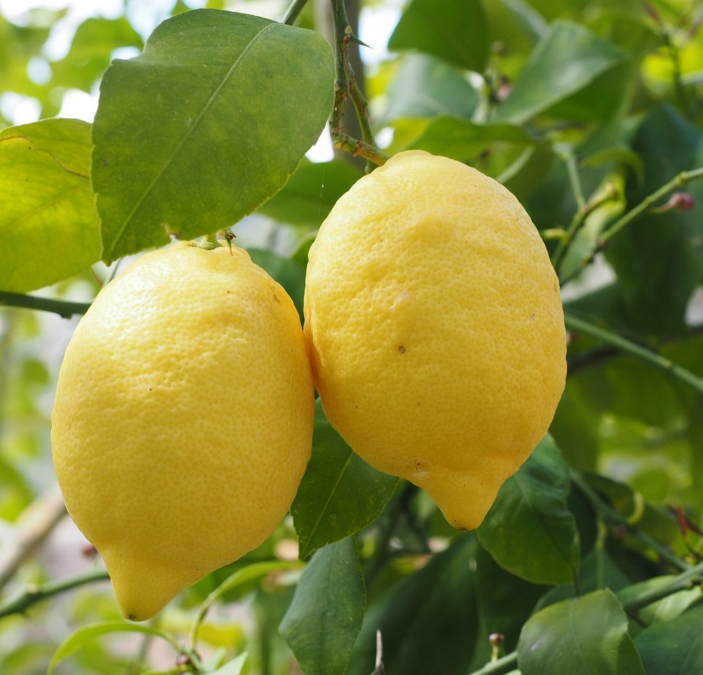 Lemon Essential Oil – Citrus limonum