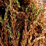 Sesame Oil: A simple tip to help you stay warm in winter