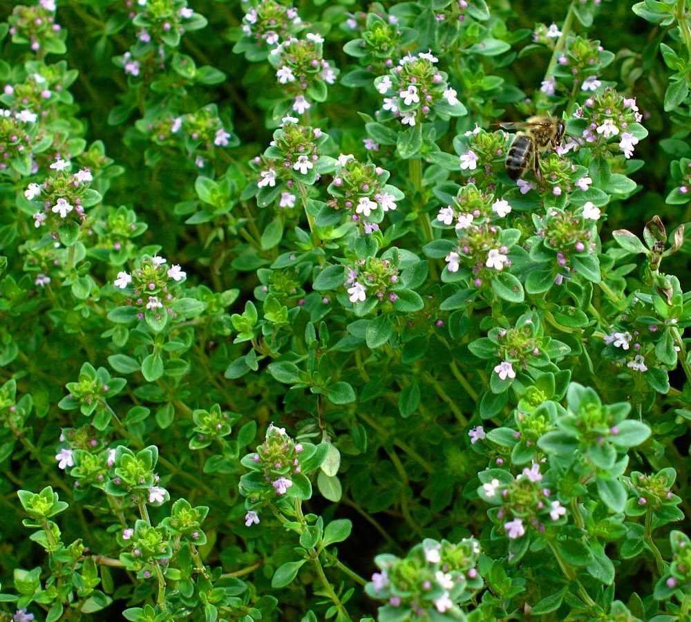 A Story about Lemon Thyme & Sell-by Dates